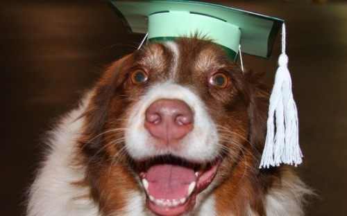 If a dog can earn an MBA, can't anyone?