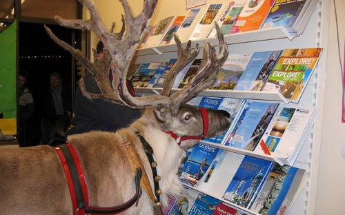 reindeers find it difficult to write cover letters